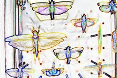 "Digital painting of insects from ""musee de histoire sciences naturelles de paris"""