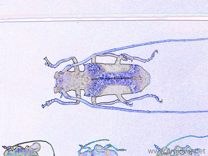 "Digital painting of insects from ""musee de histoire sciences naturelles de paris"""